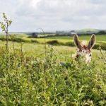 Flora, Fauna & folklore